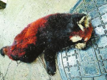 销售珍稀野生动物案