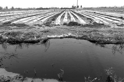 图为比来记者拍照的石家庄市藁城区兴安镇滹沱河河流内紧邻菜地的排污渠。记者 牟宇 摄