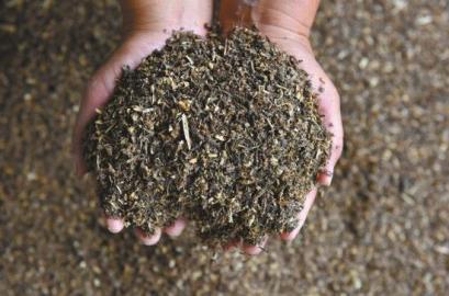 """她养的""""吃货虫""""日吞1吨垃圾 留下有机肥料(图)"""