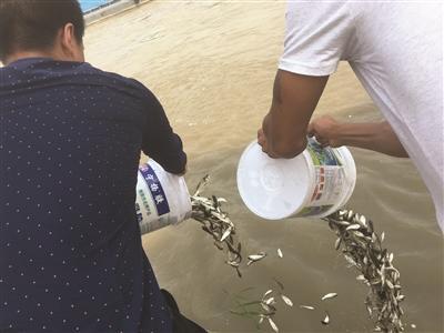 17名男子长江非法捕鱼被捕 买上万元鱼苗放生认错