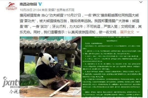 男子跳入熊猫馆和大熊猫扭打 分分钟被按倒(图)