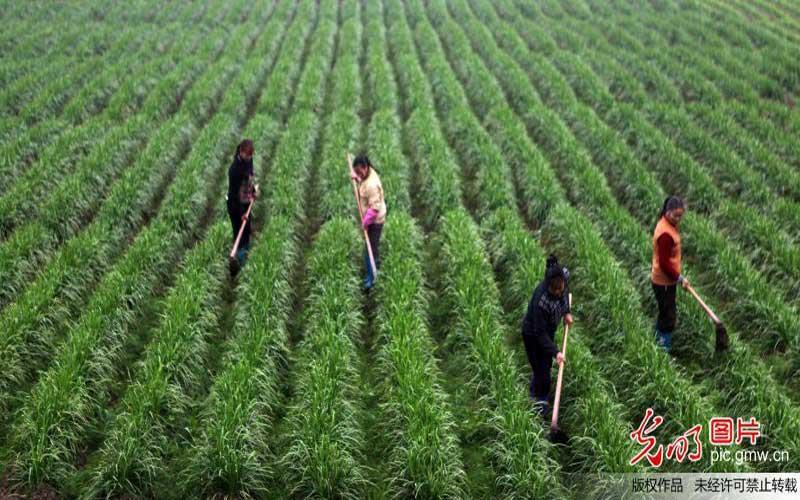 【新常态?光明论】建设产业集群打造农业创新高地