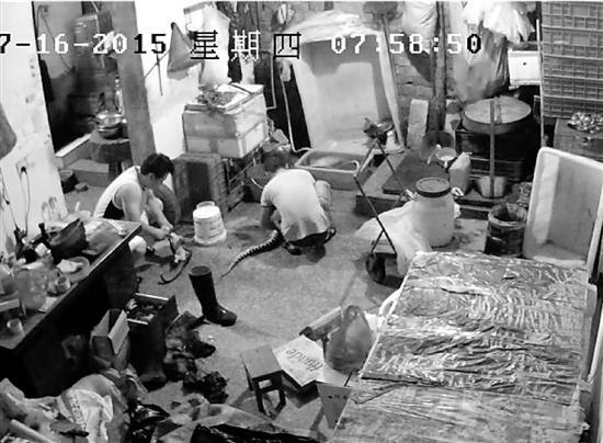 浙江最大野生动物贩卖案告破 案值超亿元