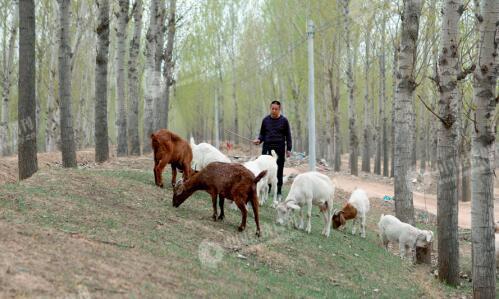 p30-2-在程新家附近,偶遇一位放羊的村民。老乡提到,近年来周边水环境有所改善,但越积越多的生活垃圾困扰村民生活。