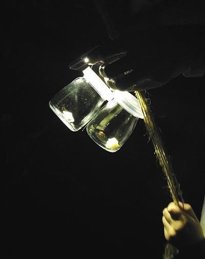 广州一景区展览萤火虫:每天空运千只参展 只能活三天