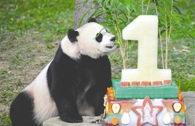 旅美大熊猫在美遭到虐待?中美双方回应质疑(图)