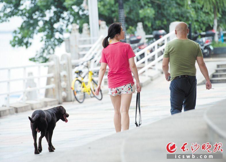 """遛狗成""""放养""""5名邻居被咬伤长沙市民盼严管"""