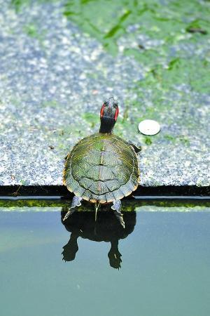 老天气预报员讲述预报故事:当年预报台风龟鳖也上阵
