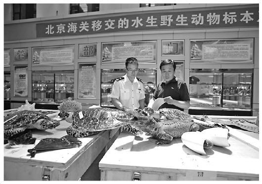 北京海关移交八百余件濒危动物制品将免费展出