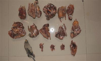 男子夜间弹弓打鸟被抓冰箱中搜出28只拔毛野禽