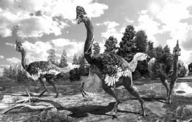 赣州发现新窃蛋龙类化石 长得像鸵鸟(图)