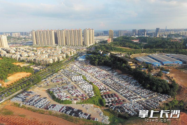 昨日,记者在万家丽路与特立路交会处一空地看到,数千辆新车整整齐齐停在空地、山坡上。长沙晚报记者 黄启晴 余劭劼 摄影报道