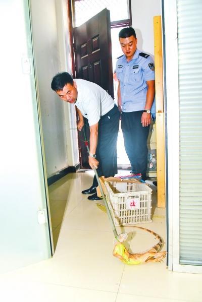 """郑州一居民家""""闯入""""红鬃蜥蜴 民警求助野生动物救护站"""
