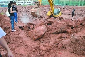广东河源一工地又现恐龙蛋