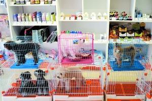 国庆寄养宠物一位难求因监管空白纠纷时有发生