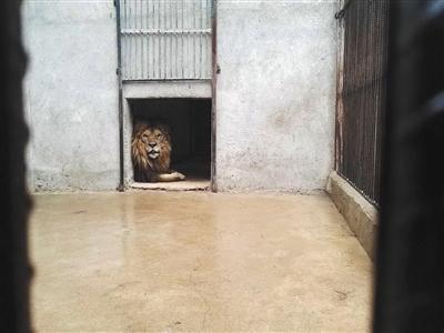 广州动物园关停已表演24年的马戏:动保与非遗之争