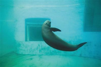 今年已发现21头江豚死亡 多与生存环境变化有关(图)