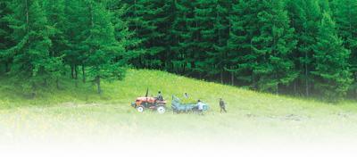 国家林业局:中国将启动大规模国土绿化行动