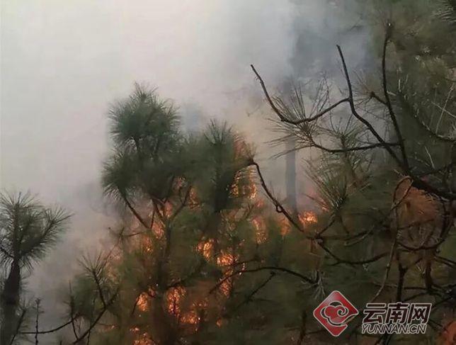 云南昭通发生森林火灾 烧毁森林面积数百亩(图)