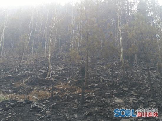 四川雅江森林火灾现场:过火后的山林漆黑一片