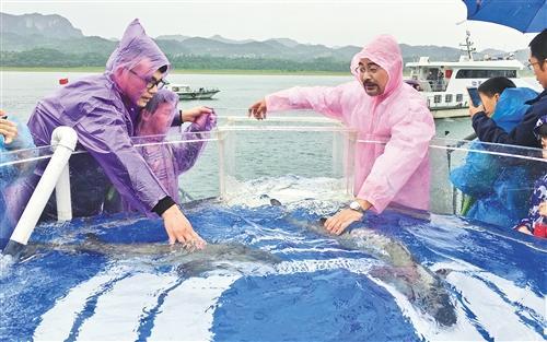 长江生态的风向标:中华鲟永续生存成为可能(图)红曲粉人吃了有坏处吗