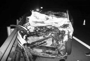 夜间高速上黄牛狂奔 重型半挂车小轿车撞牛受损警花出更叶柔
