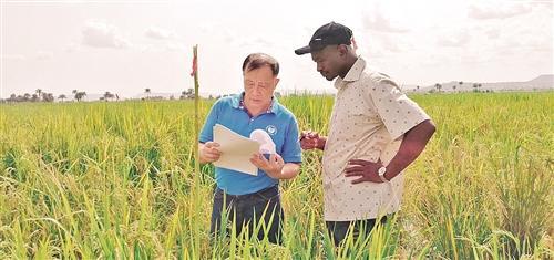 中国科学家水稻基因研究成果发布 设计水稻不再是梦st天发