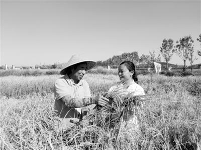 """青岛海水稻:让""""农业荒漠""""变良田非常完美李桢航牵手成功"""