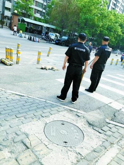 北京朝阳警方通报查找伤8人恶犬 5岁男童被撕咬脸好乐城团购