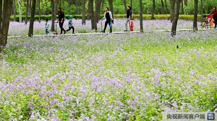"""平谷年内有望成为北京市首个""""国家森林城市""""济人急难"""