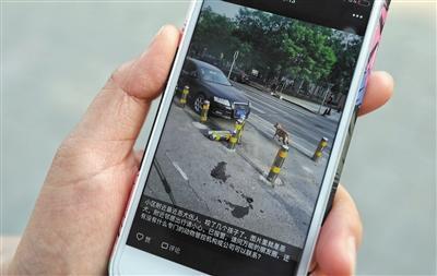 北京朝阳青年路附近多人被狗咬伤 派出所扑捕五行御妖奇谭