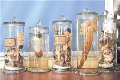 """""""采蘑菇""""的科学家:参与发表130多个新种巴黎恋人中文版全集"""