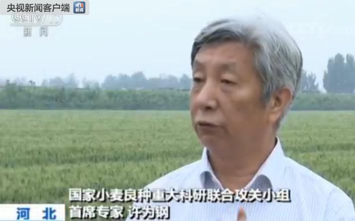 北京赛车PK10计划:中国小麦育种再突破_7个节水小麦品种发布