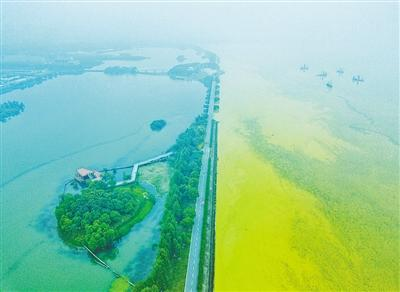 夏季无锡太湖淡黄色蓝藻泛滥 与水中环境污染有关吗?刘禹伶