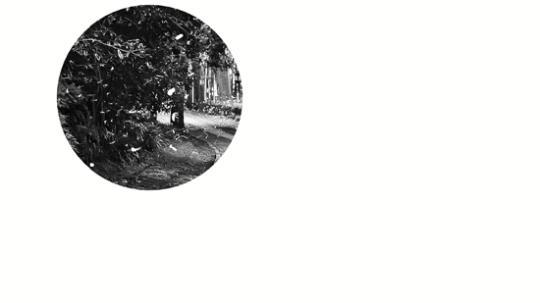 pk10单双大小稳赚技巧:云栖竹径、植物园、西溪湿地杭州冒出赏萤火虫打卡地