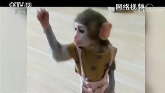 网红直播养猴牵出大案:35人被抓 20只猕猴死亡