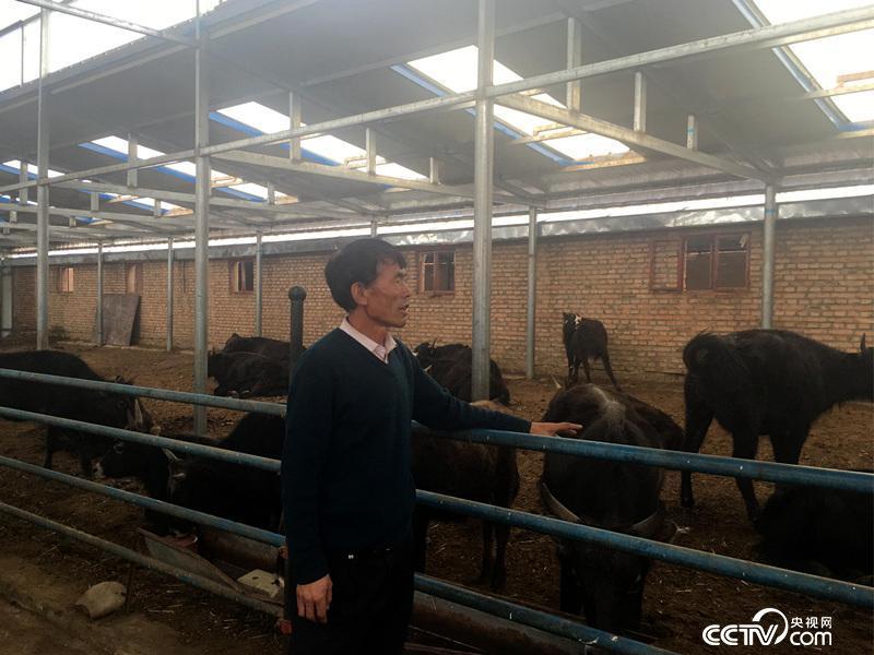 玛九才让在示范点的牛棚中介绍情况
