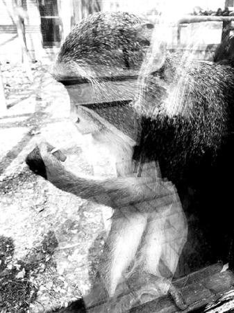 """动物园内游客""""挂面喂猴""""成灾 不少人专程带挂面进园"""