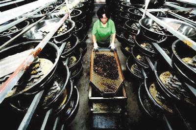 章丘用蟑螂吃垃圾:每天吃掉15吨 卫生种群控制存疑-智慧漳州-社会新闻