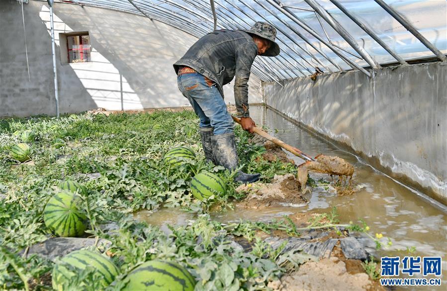 (脱贫攻坚)(3)西藏阿里:生态农业促脱贫