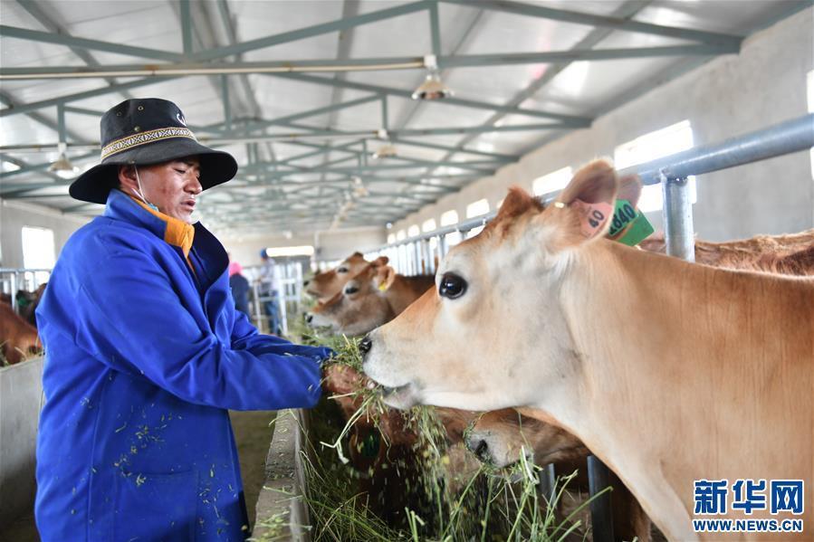 (脱贫攻坚)(4)西藏阿里:生态农业促脱贫
