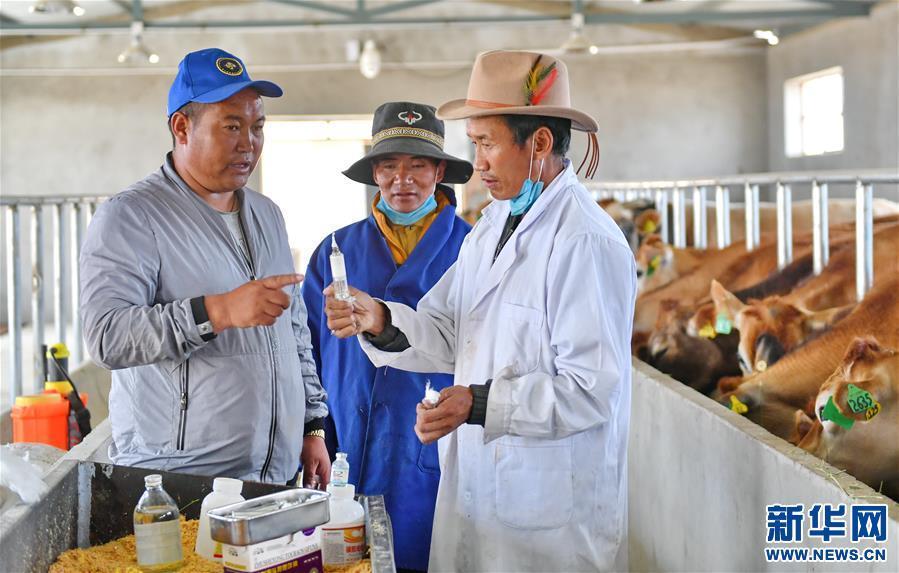 (脱贫攻坚)(2)西藏阿里:生态农业促脱贫