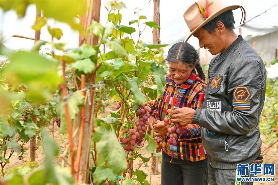 (脱贫攻坚)(5)西藏阿里:生态农业促脱贫