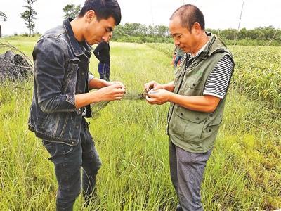 兴城现38张捕鸟网 林业部门介入调查