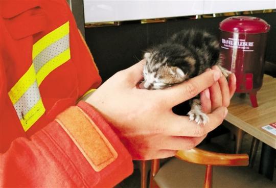 小奶猫被困餐饮店壁柜 消防员救出后决定自己养