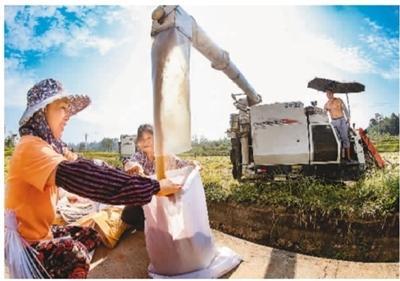 中国早稻单产每公顷比上年增加157公斤 ...