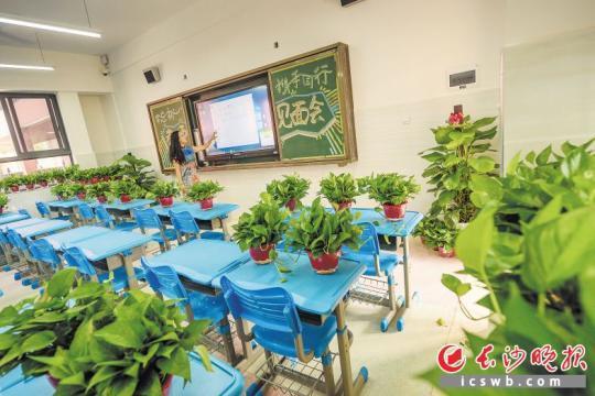 开学前,一所新建学校在教室内放置大量的绿萝等植物,改善室内空气质量,以保证孩子们的健康。 长沙晚报记者 陈飞 摄