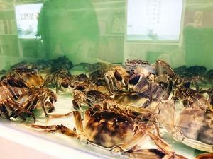 早秋螃蟹上市身价不菲论只卖