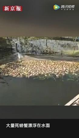 万亩大闸蟹绝收 污染的噩梦