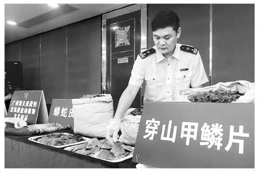 1.2万至1.8万只穿山甲遭剥鳞猎杀 广州海关起底走私内幕终极一班3开镜记者会
